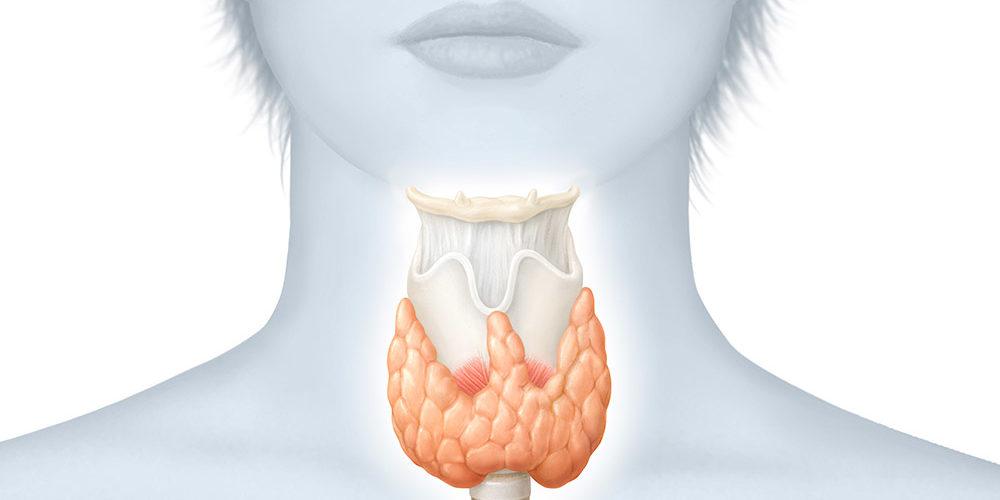 Cicatrice de thyroïdectomie à 1 jour